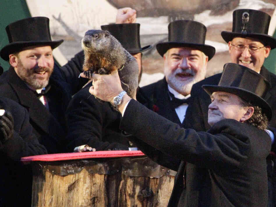 Punxsutawney Phil and his buddies earlier today.