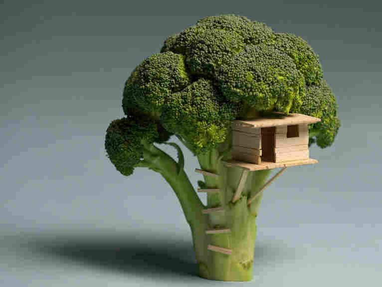 "Using broccoli, balsa wood and some glue Brock Davis has created a ""Broccoli House."""