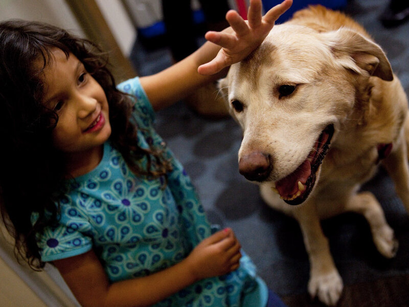 Pet Therapy: How Animals And Humans Heal Each Other : Shots