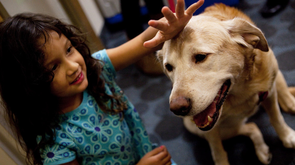 Thelma Balmaceda, age, 4, pets Viola, the resident canine at the Children's Inn on the campus of the National Institutes of Health in Bethesda, Md. Families stay at the inn when their children are undergoing experimental therapies at NIH.  (NPR)