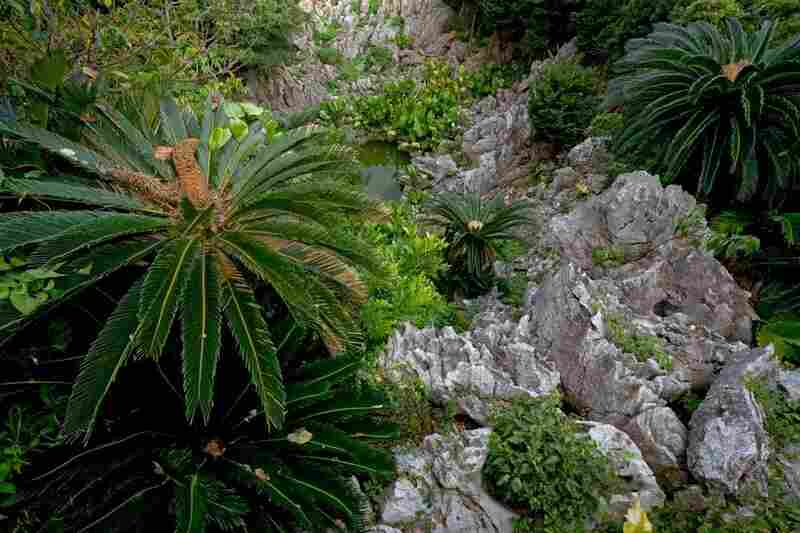 """[Cycads] are the oldest seed-bearing plants, having their roots firmly planted in the Paleozoic, over 250 million years ago,"" the book explains."