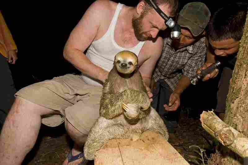 "Not all animals in the book are classic ""living fossils,"" Naskrecki explains. ""The sloth, which belongs to a relatively young group of mammals ... is there because it is a part of a very old ecosystem — the rainforest of the Guiana Shield in South America. This forest represents one of the last remaining fragments of pre-Columbian America, and is a sanctuary of the type of ecosystem that has la..."