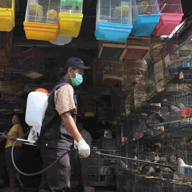 A government veterinarian worker sprays anti-bird flu disinfectant over birds and fowls at Medan city market in North Sumatra province. Indonesia reported its second human death from bird flu this year in late January.