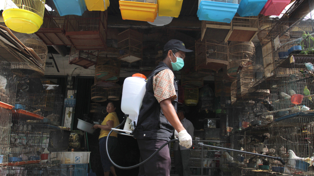 A government veterinarian worker sprays anti-bird flu disinfectant over birds and fowls at Medan city market in North Sumatra province. Indonesia reported its second human death from bird flu this year in late January.  (AFP/Getty Images)
