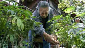Mendocino Snuffing Medical Marijuana Experiment