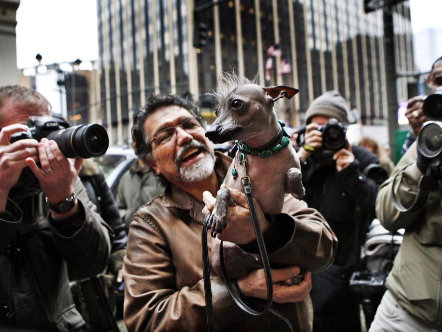 Xoloitzcuintli Westminster Westminster Dog Show: ...