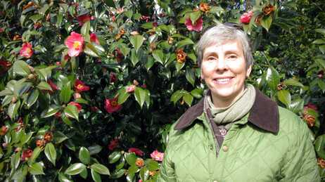Kristin Schleiter, of the New York Botanical Garden, in front blooming red camellias.