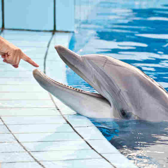 Dolphin bite? There's a medical code for that.