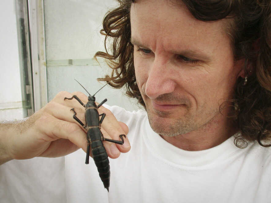Nick Carlile, seen here with the Lord Howe Island stick insect, discovered the thought-to-be extinct phasmid in 2001 on Ball's Pyramid.