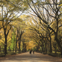 Autumn in Central Park.
