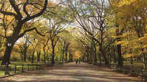 Autumn in Central Park.