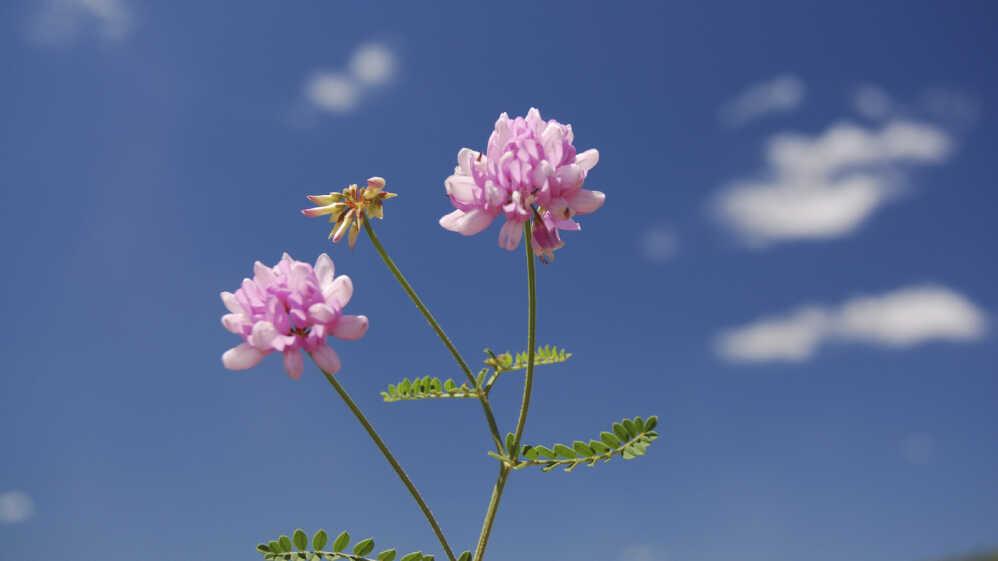 Jazz In Bloom: May Flowers