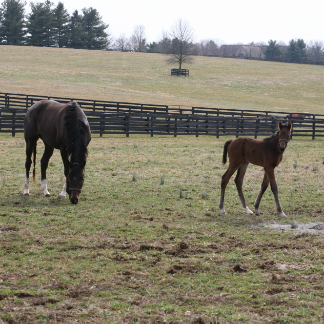 A mother and foal this month. Will the little one be a champion?