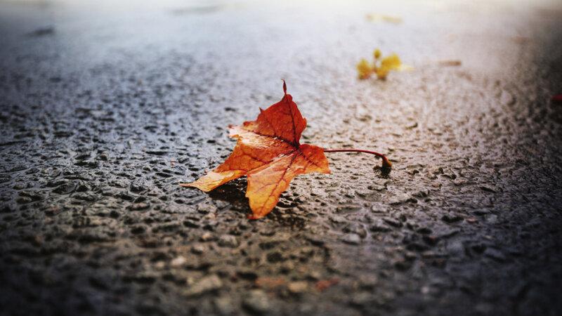 A Leaf Falls On Loneliness (For E E  Cummings) : NPR