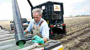 Farmer Alan Madison fills a seed hopper with Monsanto hybrid seed corn near Arlington, Illinois, U.S. A group of organic and other growers say they're concerned they'll be sued by Monsanto if pollen from seeds like these drift onto their fields.