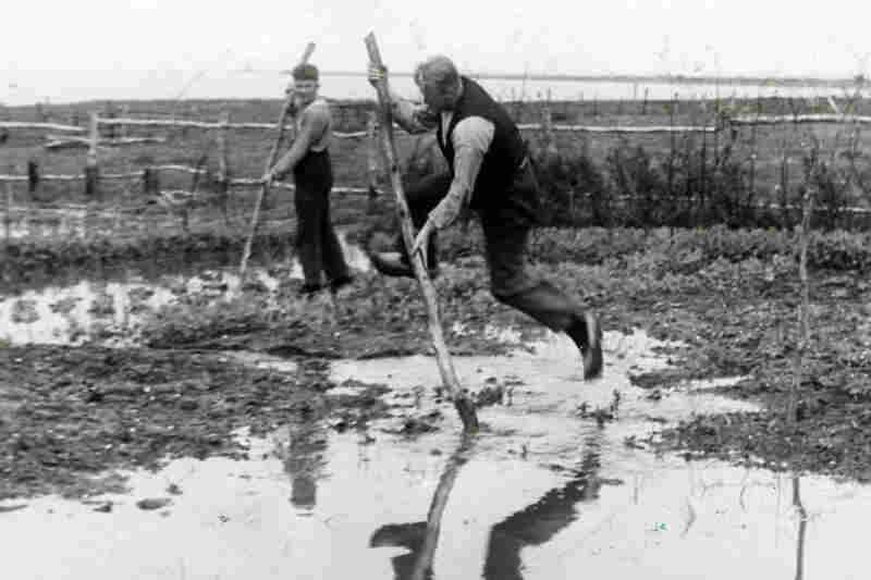 Dutch farmers cross a flooded field, Netherlands, 1938