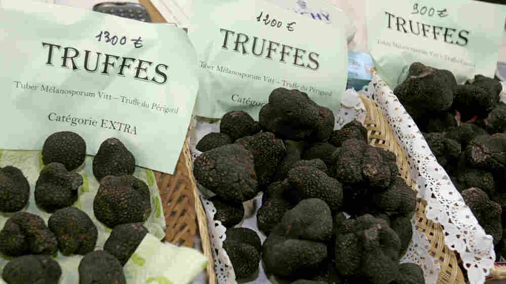 Perigord truffles for sale in southwestern France. American farmers say they'