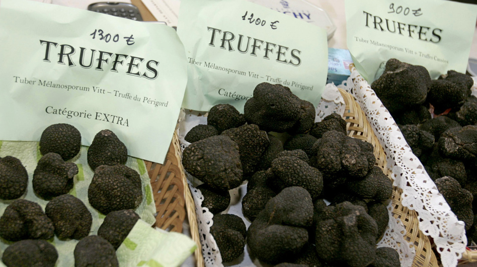 Perigord truffles for sale in southwestern France. American farmers say they've figured out how to make the delicacy flourish in Appalachian soils.