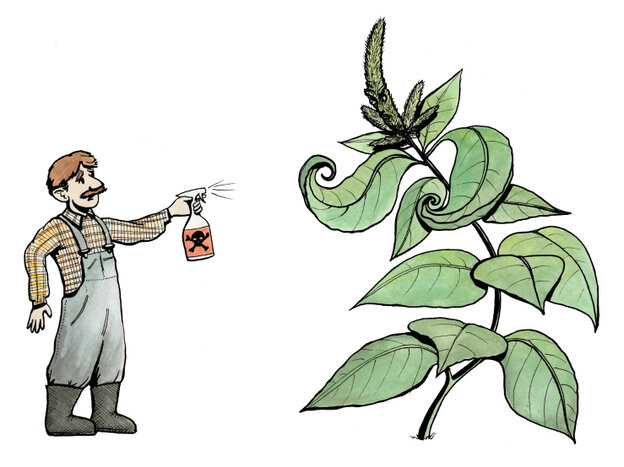 Farmers face down the threat of a pesticide-resistant species of amaranth.