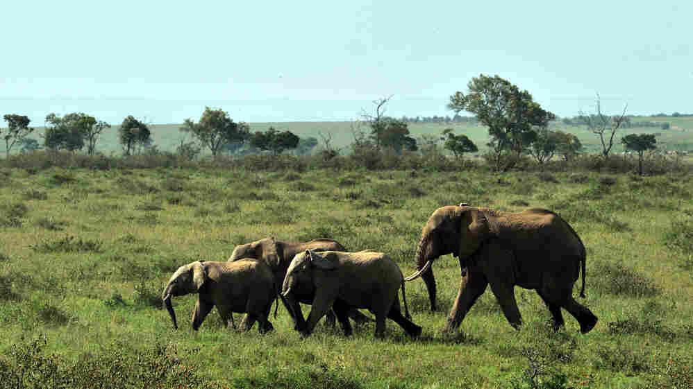 A family of elephants in Kenya's Maasai Mara game reserve.