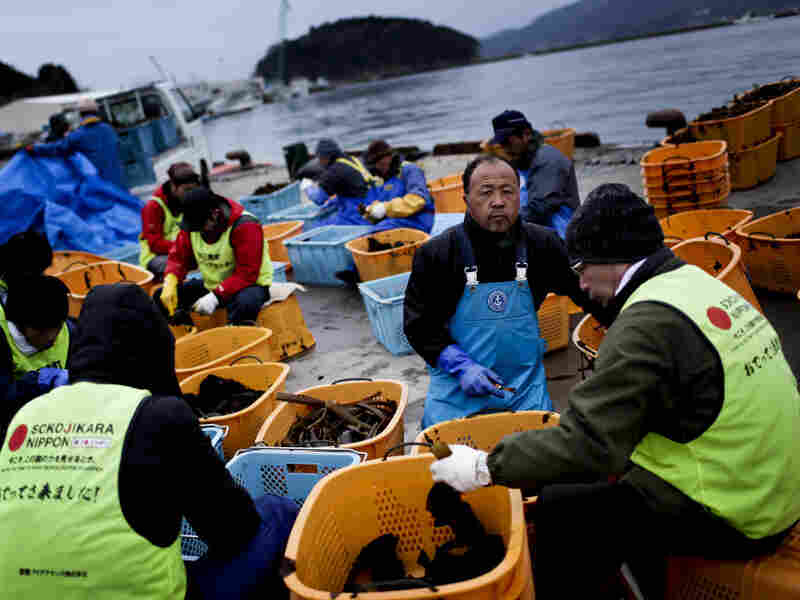 Volunteers assist workers who are slicing and packing seaweed at a temporary processing yard set up on the Minamisanriku harborfront, March 8, 2012.