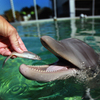 Dolphins and other marine mammals may lack the ability to taste their treats. Blame evolution.