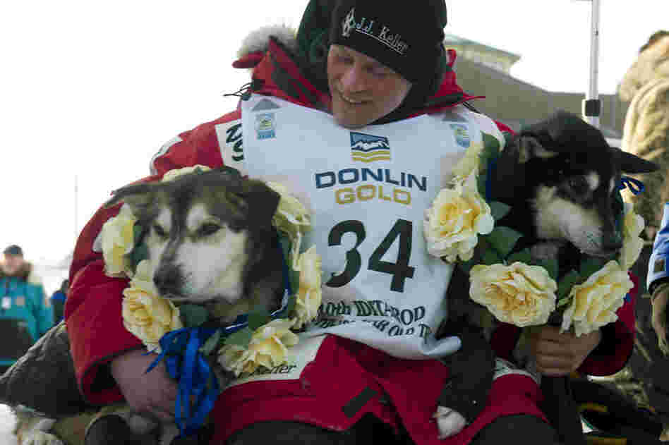 Dallas Seavey holds his leaders, Diesel (left) and Guinness, after arriving at the finish line to claim victory in the Iditarod Trail Sled Dog Race. At 25, Seavey is the youngest Iditarod champion ever.