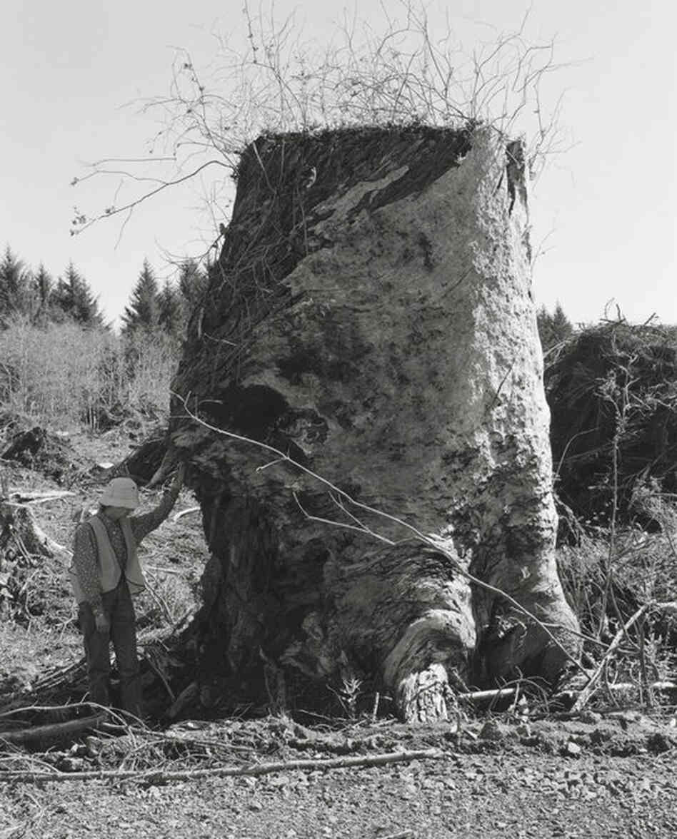 Kerstin, Next to an Old-Growth Stump, Coos County, Oregon, 1999-2003