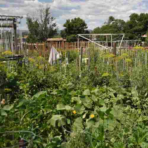 At The Community Garden, It's Community That's The Hard Part