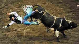 The Rodeo Circuit: Bucking Bulls And Broken Bones