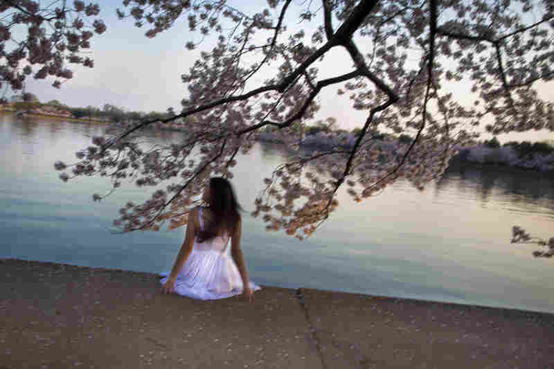 Visitors enjoy and celebrate the beauty of the centennial National Cherry Blossom Festival by the Tidal Basin in Washington, D.C.