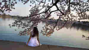 A young woman poses for a portrait at the Tidal Basin in Washington D.C., in celebration of the 100th annual National Cherry Blossom Festival.