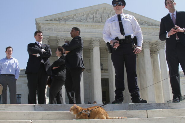 Yes, that's really a cat on a leash in the crowd outside the Supreme Court Monday.