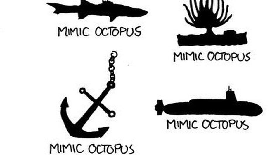Mimic Octopus Crab How to Spot a Mimic Octopus