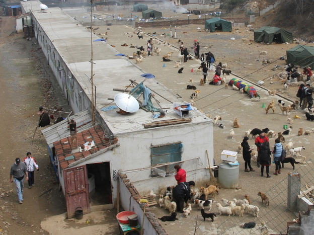 The Pingan Afu animal shelter, in eastern China's Jiangsu Province, is home to about 1,800 stray and rescued dogs.