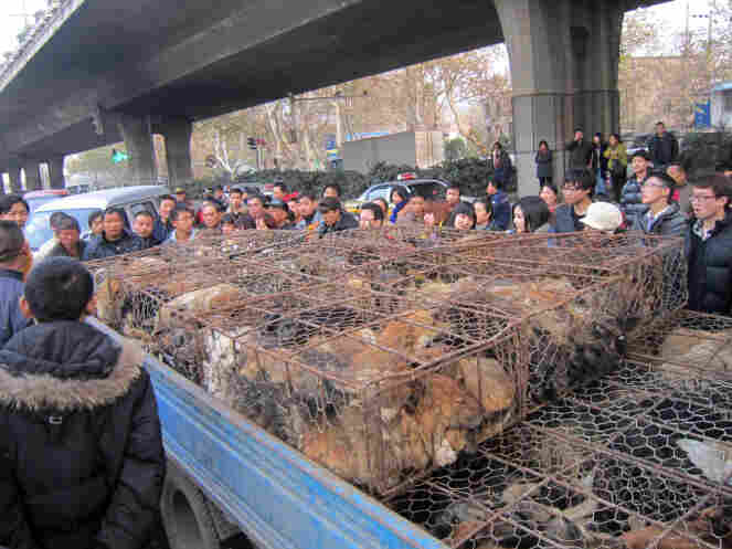 Animal activists surround a truck taking dogs to slaughter last December in Central China's Jiangsu Province. The activists ultimately paid about $8,000 to rescue the dogs.