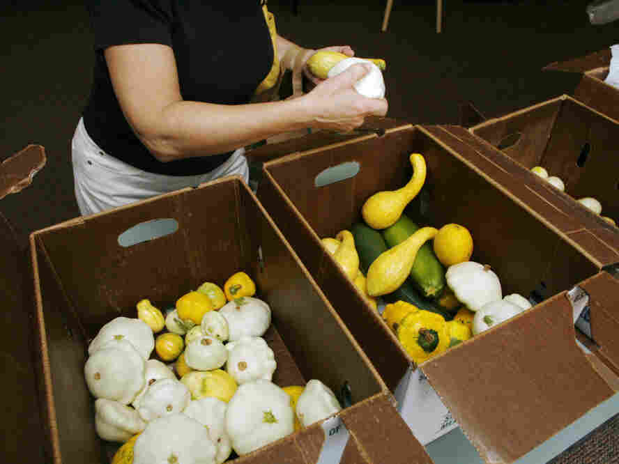 A member of the community supported agriculture program at Congregation Shearith Israel picks from boxes of squash and cucumbers in Atlanta. Some purists say CSAs are drifting away from their roots.
