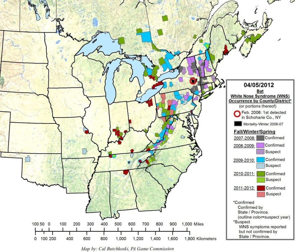 This map shows the prevalence and spread of white-nose syndrome among bats in the eastern U.S. since 2007. Incidences of white-nose syndrome have been spreading west and south.