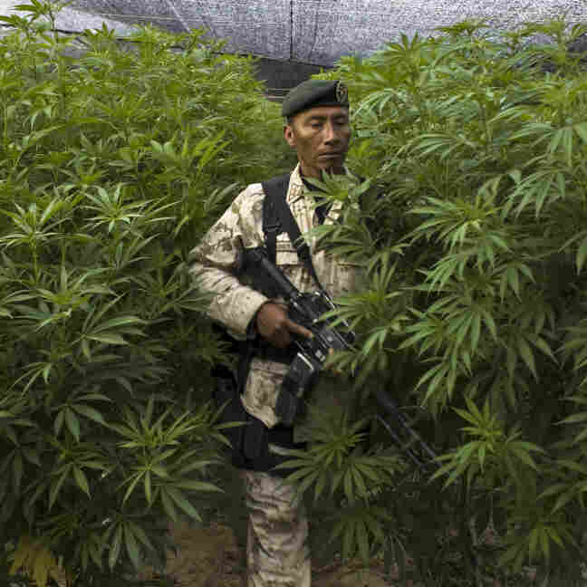 Some Latin American leaders want to talk about the possibility of legalizing some drugs, a move the U.S. strongly opposes. Here, a Mexican soldier stands guard at a huge marijuana plantation that was uncovered in San Quintin, Baja California state, near the U.S. border, last year.