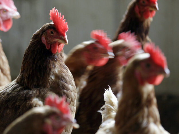 The FDA's latest effort to end the use of antibiotics as growth promoters in animals is getting mixed reviews from activists.