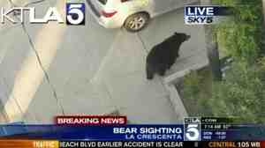 As the bear turned right, Vaz Terdandenyan was about to come down the sidewalk toward it. He got a surprise.