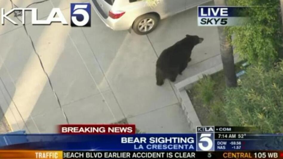 VIDEO: Texting Guy Barely Escapes Bumping Into Bear | WBUR News
