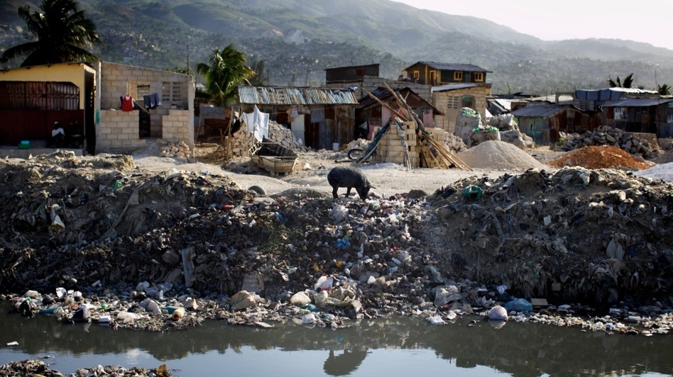 A lone pig roots through trash dumped over the side of a sewage canal that run from the center of Port au Prince through Cite de Dieu. During the rainy season, the canal overflows its banks and fills nearby houses with sewage. (NPR)