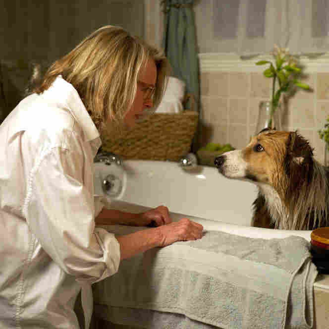'Darling Companion': Boomer Dramedy, Dog-Tired