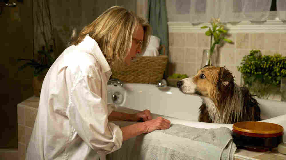 Beth (Diane Keaton) and her adopted dog, Freeway, are parted when her distracted, workaholic husband, Joseph, loses Freeway in the woods.