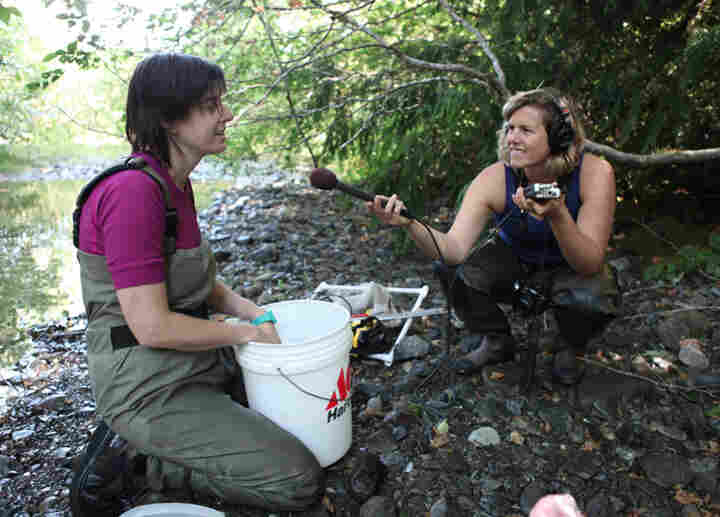 KUOW's Ashley Ahearn talks to a researcher taking measurements of the Elwha River and it's wildlife.