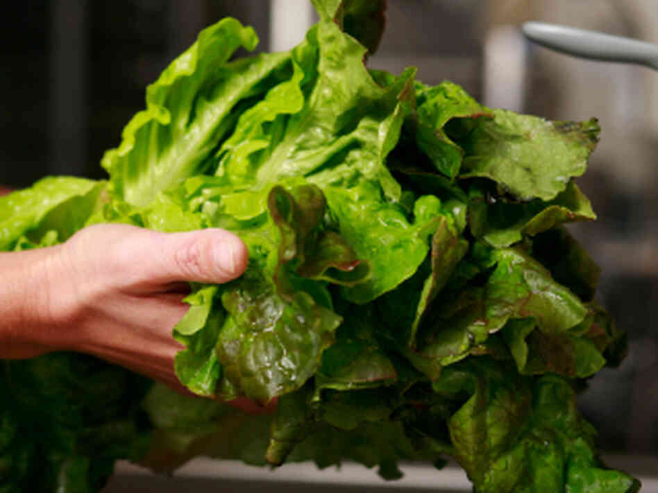Food blogger Molly Wizenberg recommends washing your lettuce and storing it in paper towels as soon as you bring it home from the store.