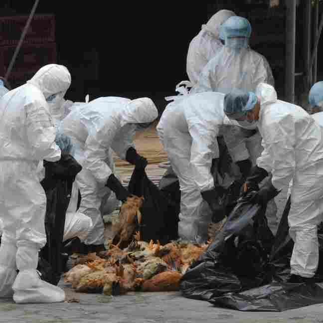 Dutch Government Set To Reconsider Restrictions On Bird Flu Study