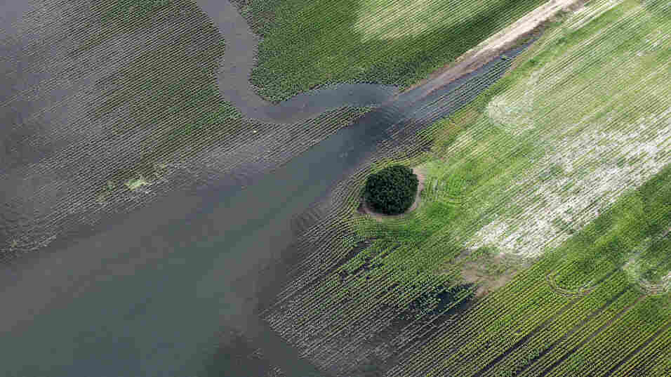 The Yazoo River floodwaters inundate crops last year in Yazoo County, Mississippi
