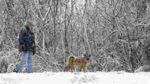 Don Buckley took his dog Gracie for a walk during the snowstorm this morning in Akron, N.Y.